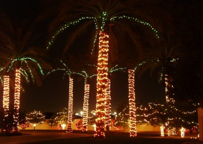 HOA Community Wrapped Holiday Palm Trees
