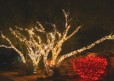 Holiday Light Wrapped Trees