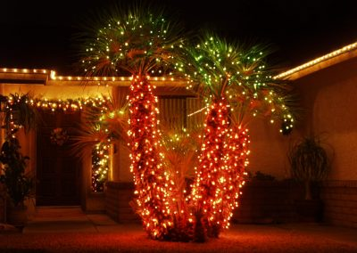 Multi-Color Wrapped and Decorated Palm Trees