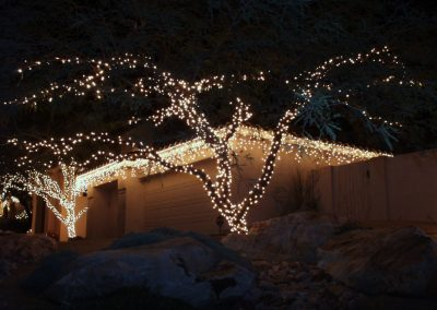 Wrapped Trees with Holiday Lights are Perimeter of Home