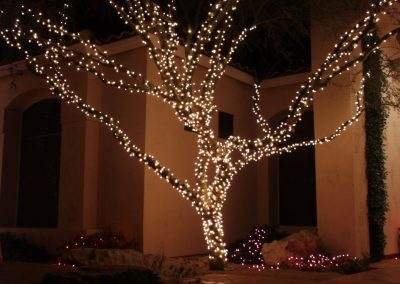 Holiday Light Wrapped Tree