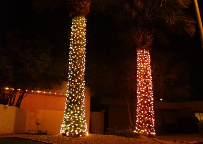 Two Multi-Color Wrapped Palm Trees